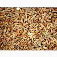 Куплю отходы зерновые, отходы масличные, отходы бобовые