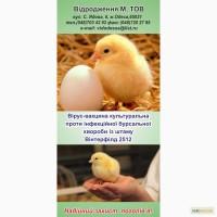 Вакцина против болезни Гамборо птиц из штамма Винтерфилд2512