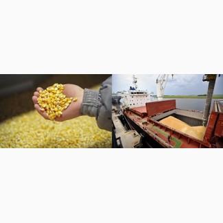 Кукуруза 3 класса FOB порты Черного моря