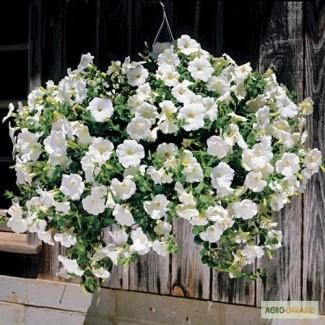 Продам семена петуния ампельная Лавина Белая F1