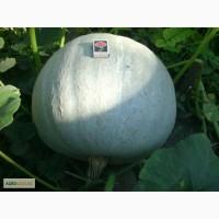 Семена: Кавбуз
