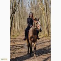 Продам коня (лошадь мерин)