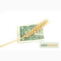 Куплю пшеницу с хозяйства от 25т. по Украине