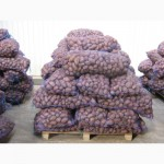 Реализуем оптом картофель