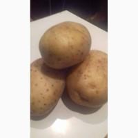 Закупаем картофель и др.овощи