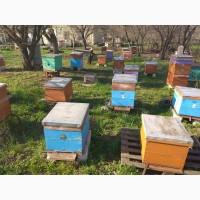 Продам пчелосемьи украинской степной