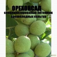 Саженцы и посадочный материал грецкого ореха гронового плодоношения