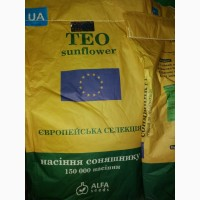 Продам гібрид соняшника ТЕО (Толерантний до Євро-лайтінгу) ПРЕМІУМ