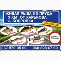 Продам с пруда живую рыбу
