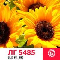 Подсолнечник лимагрейн ЛГ 5485 lg 5485 среднеранний ОР7 импорт