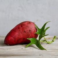 Батат (сладкий картофель, солодка картопля) - клубни и рассада