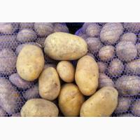 Продам картофель свежий опт