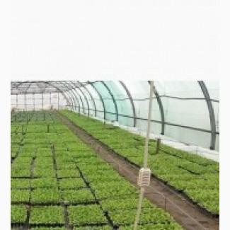 Производим рассаду Арбуза под заказ
