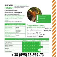 Семена кукурузы. Гибрид Плевен / ФАО 270, фр.селекция (Майсадур)