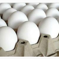 Продам яйця курячі. Доставка наша. Яйце куряче біле