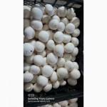 Продам гриб шампіньйон свіжий, консервований, сушений( доставка по україні)