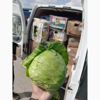 Срочно продам молодую капусту от производителей и постащиков с 5 тонн