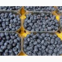 Продам ягоди ЛОХИНИ, БУРУВКА ГОЛУБІКА (Голубика)! Урожай 2020