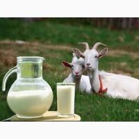 Оптовая продажа козьего молока