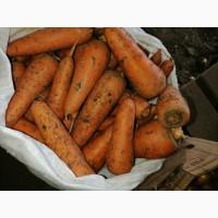 Продам морковь хорошего качества