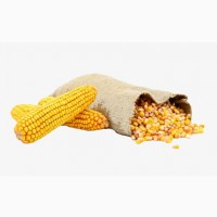 Продам кукурузу 180$/тонна CIF
