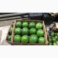 Авокадо из Доминиканы