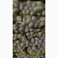 Продам товарный картофель сорта К.Анна, Гранада, Гала