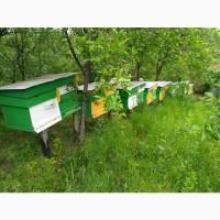 Пчелопакеты. Карпатка. Бджолопакети