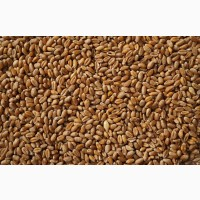 Купівля зерна