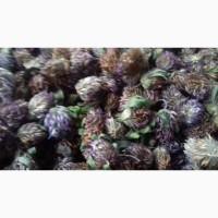 Продам лікарські рослини трави Звіробій