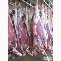 Cow frozen (Halal) - Корова в полутушах замороженная