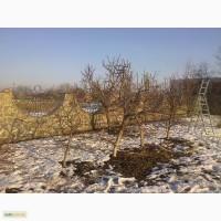 Обрезка плодовых деревьев весной.Спил деревьев