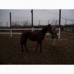 Продам спортивних коней