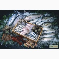 Рыба замороженная оптом