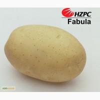 Семена картофеля Фабула