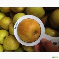 Продам яблока оптом