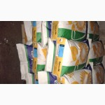 Семена кукурузы сои подсолнечника SYNGENTA НК Конди