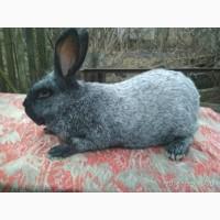 Кроленята різних порід