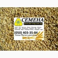 Продаем семена яровой ячмень лучшее качество