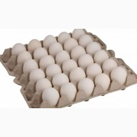 Купити Яйце Бройлер Росс 308. Продам інкубаційні яйця Росс 308