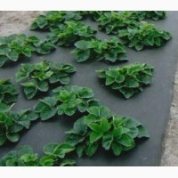 Агроволокно Агротекс 60 (1, 6х100) черного цвета