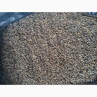 Продам семена кореандра