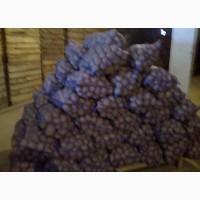 Продам оптом картофель семенной и продовольственный. Сорта Гранада и Белароза