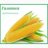Посевные семена кукурузы Галатея ФАО 260 Рост Агро
