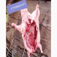 М#039;ясо бобра
