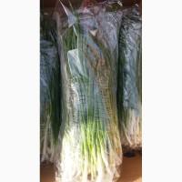 Цибуля зелена продам