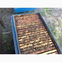 Продам бджолосім#039;ї відводки рої