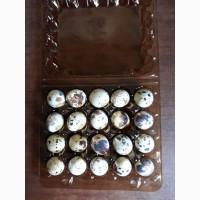 Перепелиные домашние яйца. 20 шт. 15 гр