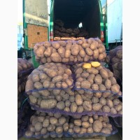 Картопля 2019, відмінна якість