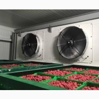 Услуги шоковой заморозки ягоды - Послуги шокової заморозки ягоди